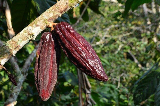 Какао изображение